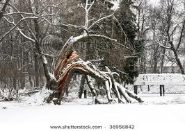 images broken tree2.jpg